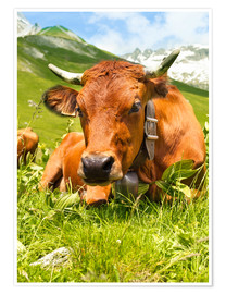 Juliste Cow with bell on mountain pasture
