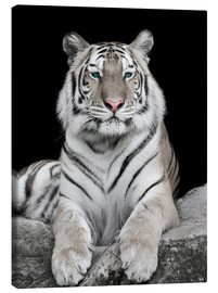 Canvas-taulu  Handsome tiger with color accents