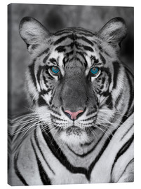 Canvas-taulu  Tiger portrait with color accents
