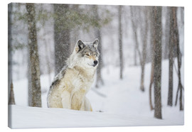Canvas-taulu  philosophical wolf - Dominic Marcoux