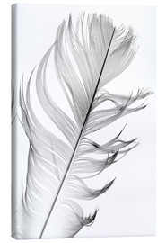 Canvas-taulu  Delicate feather