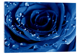 Akryylilasitaulu  Blue Roses with Water Drops