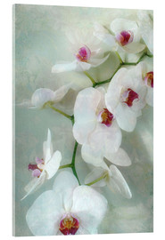 Akryylilasitaulu  Composition of a white orchid with transparent texture - Alaya Gadeh