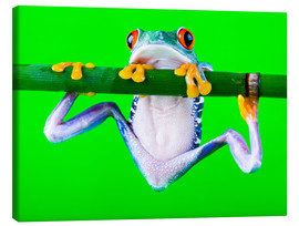 Canvas-taulu  colorful frog on green