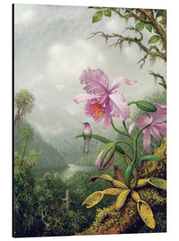 Alumiinitaulu  Hummingbird Perched on an Orchid Plant - Martin Johnson Heade