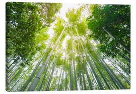 Canvas-taulu  Light falls through the bamboo forest