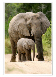 Juliste Mother and calf