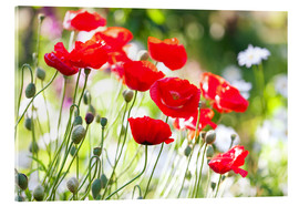 Akryylilasitaulu  Red poppies on a sunny day