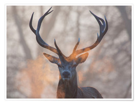 Juliste  Stag breath at sunrise, Richmond park - Alex Saberi