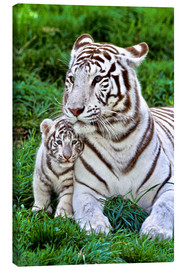 Canvas-taulu  White tiger mother with child - Gérard Lacz