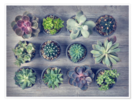 Juliste Different succulents above the black wooden background