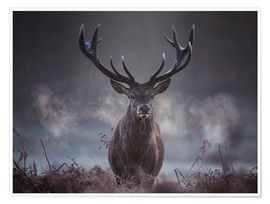 Juliste  A majestic red deer stag breathing - Alex Saberi