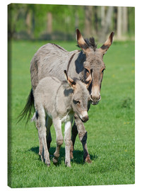 Canvas-taulu  Donkey mum and her little baby