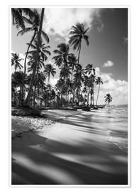 Juliste Tropical palm trees on a Brazilian beach in black and white