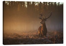 Canvas-taulu  Stag in autumn sunrise - Alex Saberi