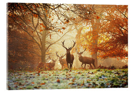 Akryylilasitaulu  Stags and deer in an autumn forest with mist - Alex Saberi