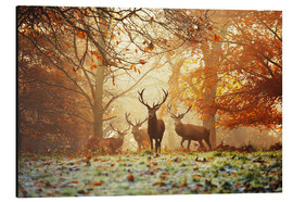 Alumiinitaulu  Stags and deer in an autumn forest with mist - Alex Saberi
