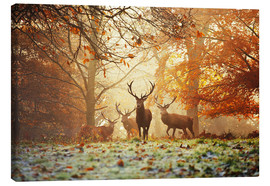 Canvas-taulu  Stags and deer in an autumn forest with mist - Alex Saberi