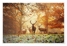 Juliste  Stags and deer in an autumn forest with mist - Alex Saberi