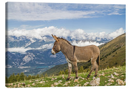 Canvas-taulu  Donkeys on a lonely mountain meadow