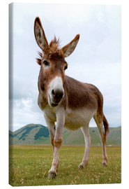 Canvas-taulu  Portrait of the donkey - Click Alps