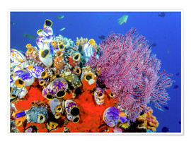 Juliste Coral reef in Indonesia