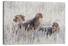 Canvas-taulu  Cheetah with cubs