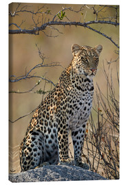 Canvas-taulu  Leopard perched on its rock - James Hager
