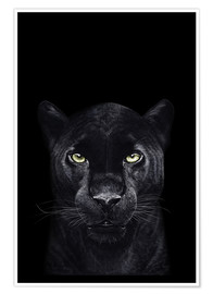 Juliste Black panther on a black background