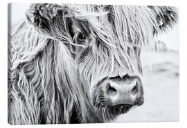 Canvas-taulu  Highland cattle - gentle look - Art Couture