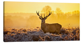 Canvas-taulu  Deer in the autumn forest - Art Couture